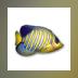 Fish Desktop Wallpaper