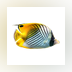 3D Fish School Screen Saver